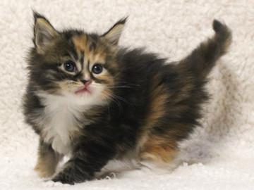 Waco_kitten3_17051601