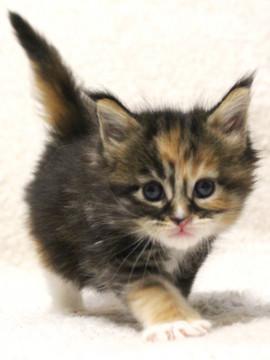 Waco_kitten3_17051602