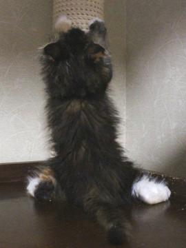 Cartier_kitten2_17051702