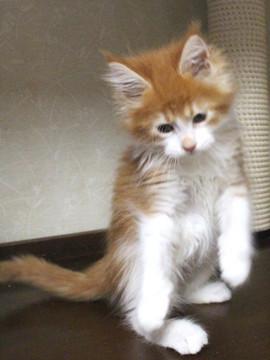 Cartier_kitten4_17051703