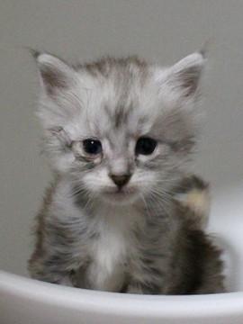 Runrun_kitten1_17051802
