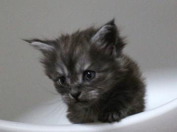 Runrun_kitten2_17051802