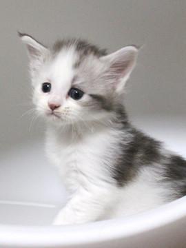 Bouquet_kitten4_17052002