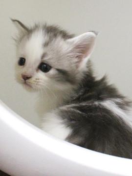 Bouquet_kitten4_17052004