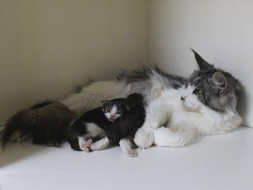 Hana_kittens_17052401