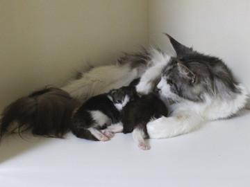 Hana_kittens_17052402