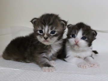 Hana_kittens_17060301