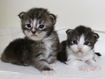 Hana_kittens_17060302