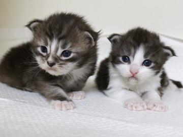 Hana_kittens_17060303