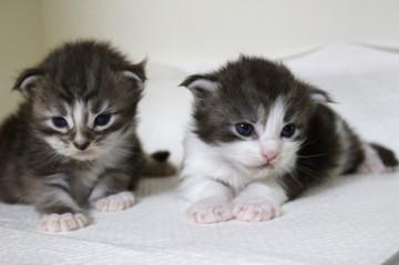 Hana_kittens_17060304