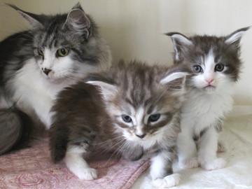 Hana_kittens_17061901