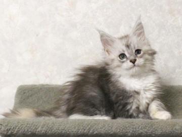 Runrun_kitten1_17062004