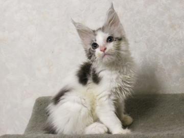 Bouquet_kitten1_17062202