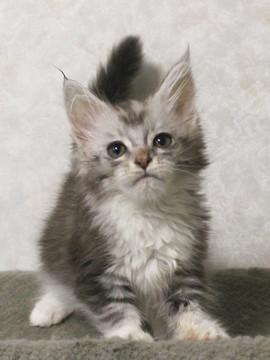 Bouquet_kitten2_17062301