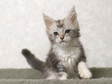 Bouquet_kitten2_17062304