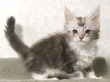 Bouquet_kitten2_17062306