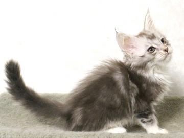 Bouquet_kitten2_17062307