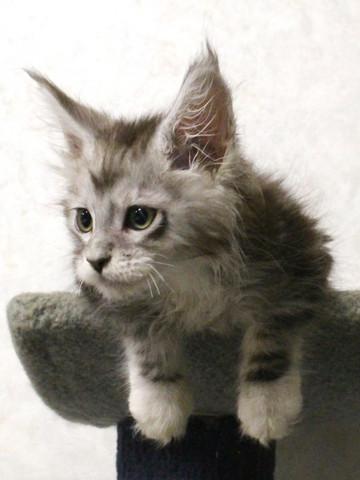 Waco_kitten3_17063001