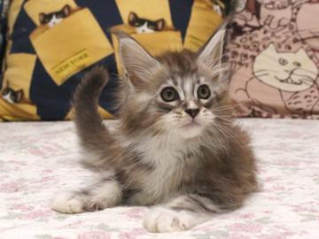 Hana_kitten2_17072202
