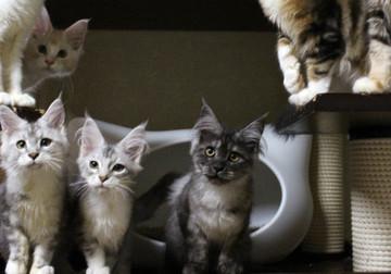 Kittens_17082105