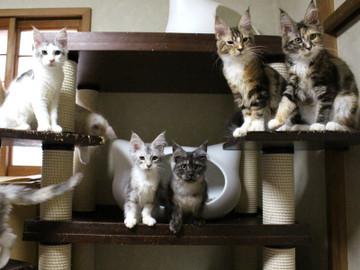 Kittens_17082106