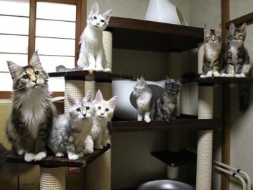Kittens_17082107
