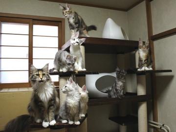 Kittens_17082109