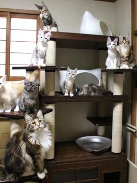 Kittens_17082110