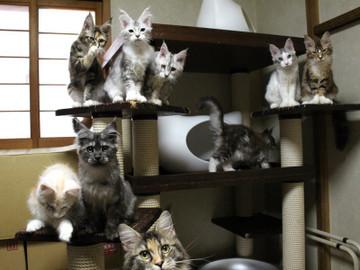Kittens_17082111
