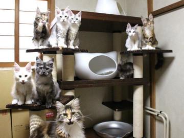 Kittens_17082112