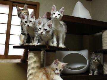 Kittens_17082113
