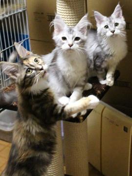 Kittens_17082101