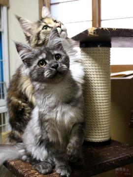 Kittens_17082102