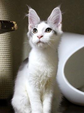 Kittens_17082103