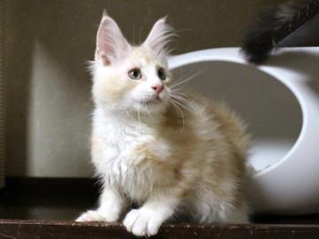 Kittens_17082104