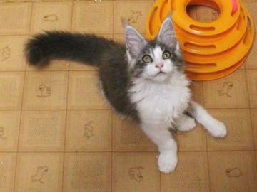 Kittens_17082114