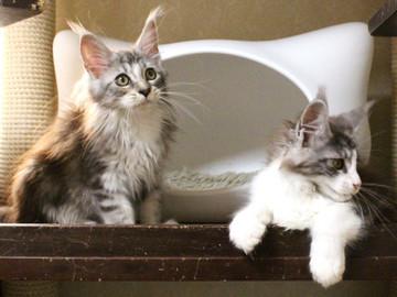 Hana_kittens_17082401
