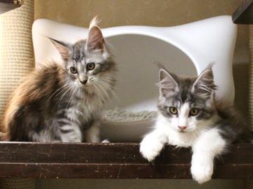Hana_kittens_17082402