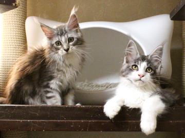 Hana_kittens_17082403_2