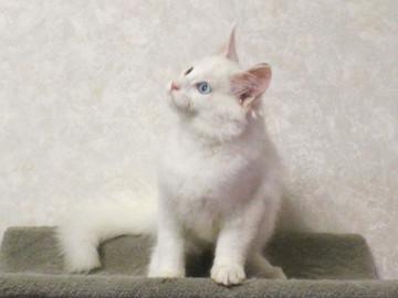 Buranko_kitten3_17101606