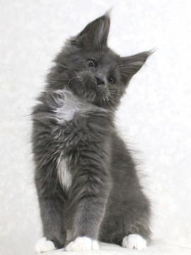 Cartier_kitten2_18020505