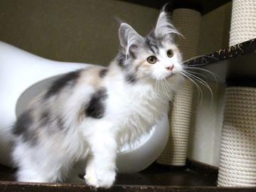 Waco_kitten2_18012304