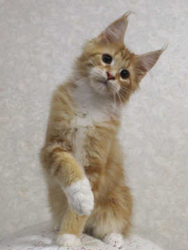 Cartier_kitten3_18030402