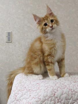 Cartier_kitten3_18030406