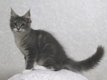 Cartier_kitten5_18030401