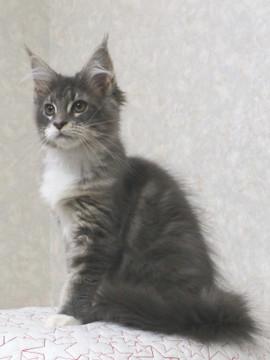 Cartier_kitten5_18030402