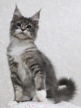 Cartier_kitten5_18030406