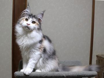 Waco_kitten2_18030806