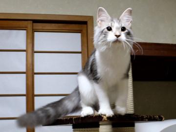 Buquet_kitten_18041402