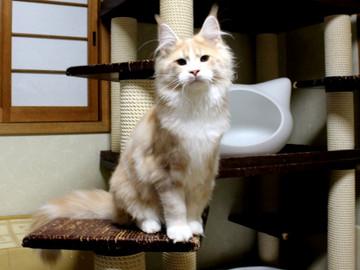 Cartier_kitten4_18042101